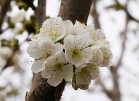 一组春日唯美樱花高清图片欣赏