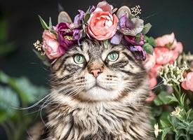 一组戴着花环超高颜值的猫猫图片欣赏
