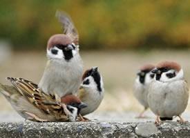 小麻雀們各種活潑可愛,還有互毆、胖揍的名場面