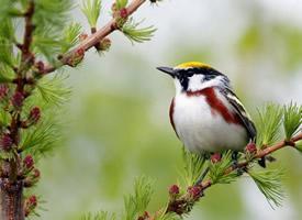 一組超級可愛的野外小鳥圖片欣賞
