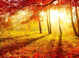 一组唯美的秋天落叶风景壁纸欣赏