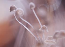 小巧精致的蘑菇唯美高清圖片欣賞