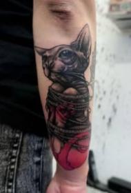 貓刺青圖片 一組動物寵物貓的紋身圖片欣賞