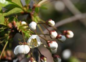 一組唯美的小清新花卉高清圖片欣賞