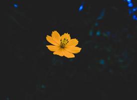 唯美綻放的花朵圖片電腦壁紙