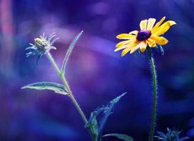 一組小清新植物花卉高清圖片欣賞