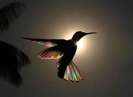 一組在光照耀下五彩繽紛的小鳥