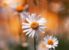 一朵花的凋零荒蕪不了整個春天