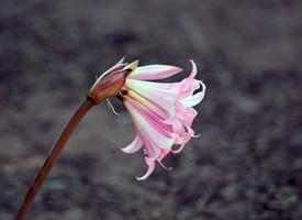 一組超清唯美花卉圖片欣賞