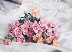 一組粉色系治愈系花朵圖片欣賞