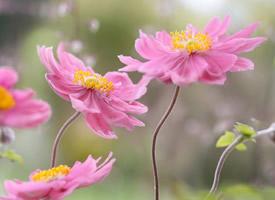 春天唯美小花微距攝影圖片壁紙