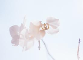 一組清新淡雅花卉高清圖片欣賞