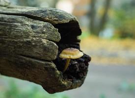 一組野生蘑菇高清圖片欣賞