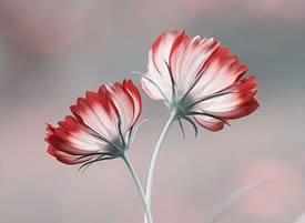 一組意境美的鮮花特寫圖片欣賞