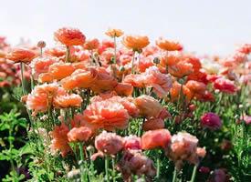 滿地都盛開著唯美的花束圖片欣賞