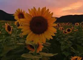 做自己的太陽,與山川湖海為伴