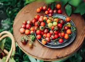 一組顏色好看酸酸甜甜的番茄圖片