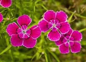 近距花朵圖片攝影高清圖片欣賞