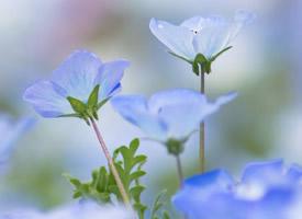 清新淡雅的花卉圖片手機壁紙
