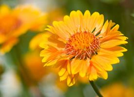 清新好看的黃色花卉圖片欣賞