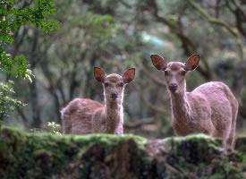 一組靈巧可愛的奈良小鹿圖片