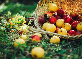 一組秋天里美麗的蘋果圖片欣賞