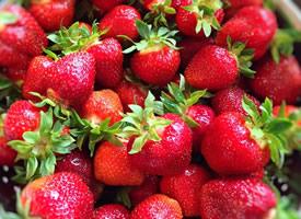 一組酸甜可口紅紅的草莓圖片欣賞