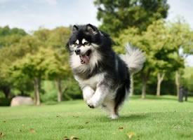 走路帶風有飄逸感的小狗狗圖片