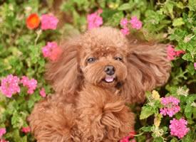 一組可愛開心的小狗狗圖片欣賞
