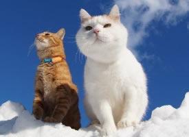 兩只超級可愛的好朋友