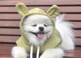 泡菜國的微笑小天使Angpang狗狗