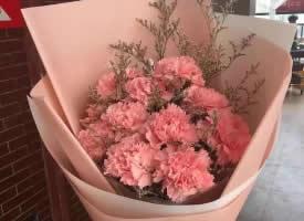 象征母愛的康乃馨花束圖片