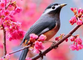 可愛的野外鳥兒圖片