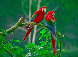 一對可愛的鳥兒圖片欣賞
