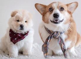 一組可愛的兩個好朋友狗狗圖片