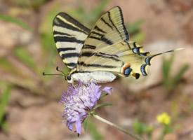 一組停在植物上的蝴蝶圖片欣賞