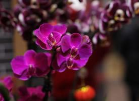 一組平凡而漂亮的蝴蝶蘭圖片