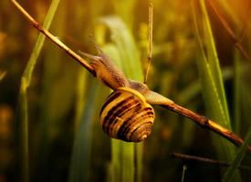 蜷縮在植物上的蝸牛圖片欣賞