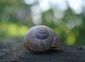 蜷縮在蝸牛殼里的蝸牛圖片