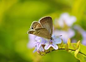 一組美麗的花間蝴蝶圖片壁紙