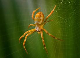 蜘蛛微距離拍攝高清圖片欣賞