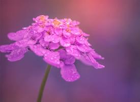 清新唯美花卉攝影圖片電腦壁紙