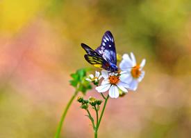 一組自由自在的蝴蝶圖片欣賞