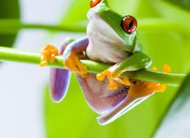 可愛的小青蛙桌面壁紙