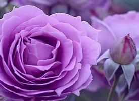 唯美植物花卉特寫圖片手機壁紙