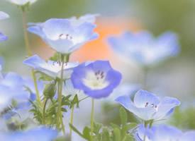清新淡雅植物花卉圖片桌面壁紙
