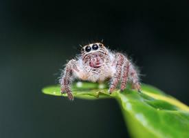 蜘蛛微距離拍攝高清圖片