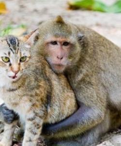 貓和猴子溫馨圖片