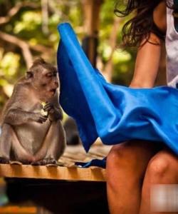 猜猜看 這只猴子看到了什么 十二生肖猴猴