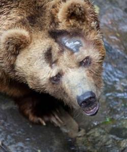 動物園棕熊照片